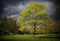 Stormy Weather (Jocelyn777) Tags: trees foliage green landscape sky clouds stormclouds parksandgardens london england textured weather