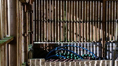 20180315_153534 [ps] - Scarring Light (Anyhoo) Tags: anyhoo photobyanyhoo tgh hydestile surrey england uk barn wall timber wooden slats planks screen frame baffle barrier stripes shadow light repetition
