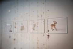 Caterina Saban Profondo Bianco 2017 stampe fotografiche 60x60 cm (anto291) Tags: vetrinedilibertà lalibreriadelledonne fabbricadelvapore arte artecontemporanea art contemporaryart