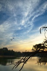 DSC_0401 (Ashwin Ravi Anandan) Tags: lalbagh sunset sky colors dusk birds settingsun warm bangalore india karnataka d7200 darktable lake reflections landscape nikon nikond7200 evening horizon