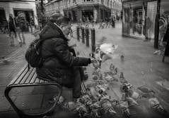 birdman (Daz Smith) Tags: dazsmith fujifilmxt3 xt3 fuji bath city streetphotography people candid portrait citylife thecity urban streets uk monochrome blancoynegro blackandwhite mono pigeons birds tourist sitting pidgeons