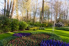 Keukenhof - Various colored bulbs (jan.vd.wolf) Tags: keukenhof thenetherlands lisse zuidholland nederland nl lisse2019 bloembollen tulpen bloemen flowers bulb bulps