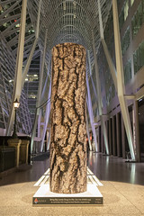 Anthropocene: Ancient Forests it in the Allen Lambert Galleria @ Brookfield Place Toronto (A Great Capture) Tags: brookfield place toronto anthropocene ancient forests allen lambert galleria anthropoceneproject canon eos 6d mark ii 2470mm ef2470mm agreatcapture agc wwwagreatcapturecom adjm ash2276 ashleylduffus ald mobilejay jamesmitchell on ontario canada canadian photographer northamerica torontoexplore bfpltoronto spring springtime printemps 2019 city downtown lights urban night dark nighttime digital dslr lens architecture architektur arquitectura design public art artinstallation installation