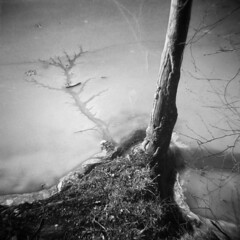Silver Lake in Winter #39 (LowerDarnley) Tags: holga silverlake winter ice frozen crack tree shore lake saugus ma breakheartreservation