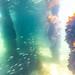 St Leonards Pier Underwater-36