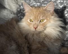 I grow in the sun (Krzysztof Kozłowski) Tags: cat sun pet animal
