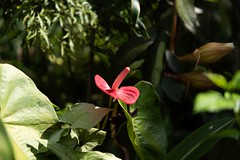Seychelles flora (Michael Croft) Tags: seychelles tropical