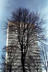 Arts Tower with Winter Tree (pho-Tony) Tags: ricoh35zf ricoh 35 zf 35mm compact rikenon 40mm f28 rikenon40mmf28 analog analogue vintage film cds japan japanese agfavista200 agfa vista 200 tetenal c41