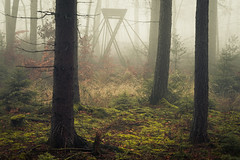 Raised Hide (Netsrak) Tags: baum bäume eu eifel europa europe forst landschaft natur nebel rheinland rhineland wald fog forest mist nature trees winter woods