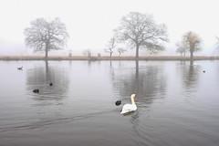 A Foggy Morning In Bushy Park (Conan500) Tags: bushy park london wildlife animals creatures nature fog foggy morning