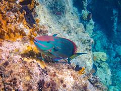 DCL March 2019 Tortola Underwater-94-2.jpg (Rhinodad) Tags: disneycruise disneyfantasy tuesday underwater 2019 dcl tortola britishvirginislands vg