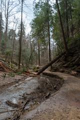 Hocking Hills-23-2 (saylorty) Tags: hockinghills hocking hills state park columbus ohio logan ash cave ashcave cedarfalls cedar falls waterfall hiking nature beautiful