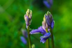 Flowers (akatsoulis) Tags: oxfordshire oxford walkingroute sunnyday ascottparkhistoricaltrail flowers nikkor50mm14g