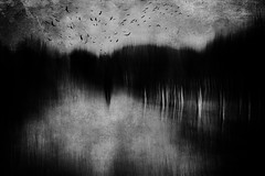 Spirit of wilderness (Lucretia My Reflection) Tags: blackandwhite bw forest wood wilderness shadow icm intentionalcameramovement cameramovement movement creepy haunting path blur birds