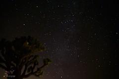 New year's eve Stargazing Party (Suma & Mohan) Tags: newyearseve milkyway stargazing nightphotography joshuatreenationalpark skyscape nightscape sonya7iii freezing belowzero astrophotography california celestial