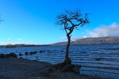 Lone tree (jgra9601) Tags: sky blue mountain sea tree 4000d canon