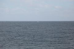 IMG_0210 (y.awanohara) Tags: humpbacks humpbackwhales whales whale southgeorgia scotiasea january2019 wildlife cetacean