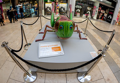 Bugs Tour. . . (CWhatPhotos) Tags: cwhatphotos olympus epl9 pen micro four thirds 43 digital camera photographs photograph pics pictures pic picture image images foto fotos photography photo tint artistic that have which with contain art mzuiko 8mm pro prime fisheye fish eye lens mtro centre intu shopping bug bugs display tour feb march 2019