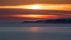 'Gold coast' (Anthony Goodall) Tags: landscape sea seascape seagull winter nature beautiful sun sunrise sunlight water bird sunset mist fog coast