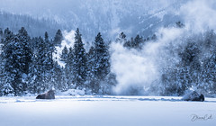 Snow Bathing (Selectivebits) Tags: nationalpark winter snow bison cold winterbeauty phtographerwildx14 intoheartx19
