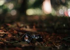 Helios-103 53mm f/1.8 + adaptador a Sony hecho con montura de cámara Kiev. Fotografiado con Carl Zeiss Jena Prakticar 1.4/50. (Adolfo Rozenfeld) Tags: sovietlens helios103 foliage contaxrf buenosaires wood botánico vintagelens plantas carlzeissjenaprakticar5014mc manuallens bokeh dof bosque
