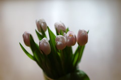 Tulips light (Baubec Izzet) Tags: baubec izzet pentax bokeh tulips flowers light