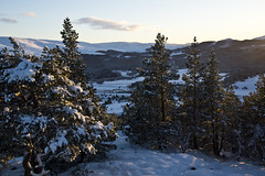 Snow in the Glen (steve_whitmarsh) Tags: aberdeenshire scotland scottishhighlands highlands craigendarroch winter snow mountain hills trees forest cairngorms topic
