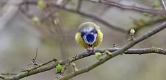 J78A0208 (M0JRA) Tags: robins birds humber ponds lakes people trees fields walks farms traylers