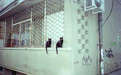 (Boris Asenov Kirov) Tags: cats proimage kodak iso100 olympus mju sofia streets gato