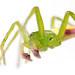 Macro of a green spider on white background