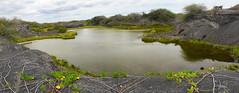 Laguna de flamencos (dcdc887) Tags: ecuador galapagos paisaje landscape naturaleza nature lagoon lago lake laguna pond agua water manglar mangrove panoramic panorámica
