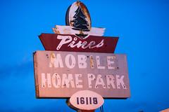 Lost in the Forest (Thomas Hawk) Tags: america california losangeles pinesmobilehomepark usa unitedstates unitedstatesofamerica neon fav10
