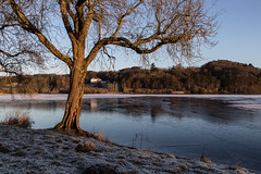 Clunie (jonathan.scaife81) Tags: tree blue hour lochclunie loch clunie morning winter snow ice frozen landscape blairgowrie butterstone dunkeld perthshire scotland canon 6d tamron28300 tamron 28300mm frost lake water