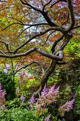 structure naturelle (fred9210) Tags: giverny paysage arbre sculpture flowers tree architectural pixels parm