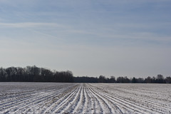 Rows in the Snow (ramseybuckeye) Tags: winter snow landscape cold tree nature sky road field blue white filed ice frost trees rural season frozen morning clouds countryside fog scene snowy day farm plowed rows pattern pentax art