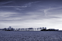 Mono In Blue (Alfred Grupstra) Tags: winter nature snow tree landscape sky ruralscene outdoors blue scenics season coldtemperature field weather frost agriculture nonurbanscene nopeople farm ice