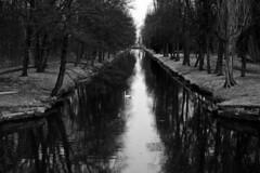 the swan_20190210_sw (h.m.a.t.s) Tags: laxenburg swan winter river symetry nature natur schwarzweis blackandwhite blackwhite olympusomd olympus omdem1markii winterday