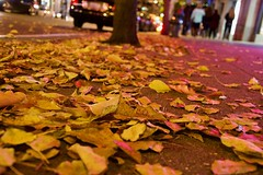 Fallen (The Vintage Lens) Tags: leaves colorful dead colros sidewalk stree tree trees