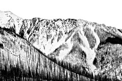 Winter after the Fire (ebergcanada) Tags: canadianrockies winter nature blackwhite monochrome snow