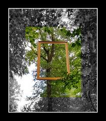 - framed - (Jac Hardyy) Tags: framed frame frames picture free art photo photographic forest leaf leaves tree trees rahmen eingerahmt fotokunst wald blatt blätter baum bäume freie kunst black white