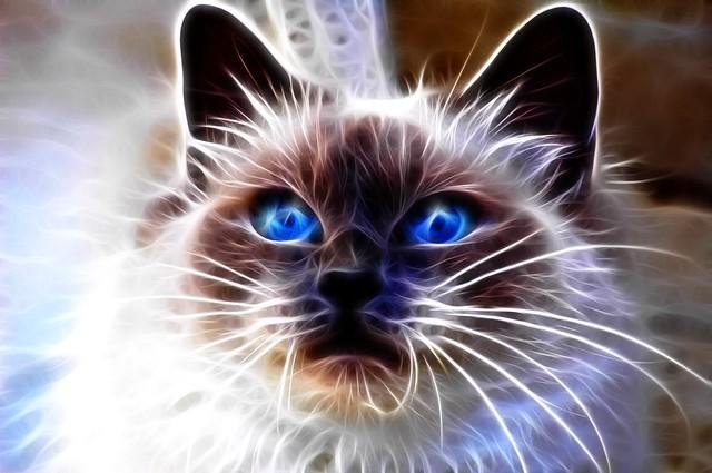 Обои кот, голубоглазый, взгляд, морда, абстракция картинки на рабочий стол, фото скачать бесплатно