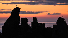 early dawn patrol (Sunshinenshadows) Tags: birds sunrise orange purple castle aberdeenshire scotland