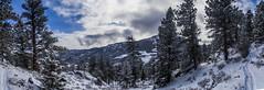 Trail Panorama (noname_clark) Tags: rockymountainnationalpark outdoor hike snow lillymountain panorama trail tree mountain