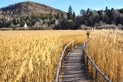 Passerella su tappeto dorato (lucamarasca1) Tags: inexplore beautifullandscape gold biotopo wildlife nikkor18200 18200 d5500 nikond5500 nikkor nikon panoramic view nature landscape südtirol altoadige monticolo