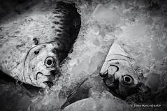Refroidis (patoche21) Tags: asie hoian voyages vietnam glace monochrome nb naturemorte noiretblanc poisson patrickbouchenard bw blackandwhite fish ice stilllife asia southeastasia