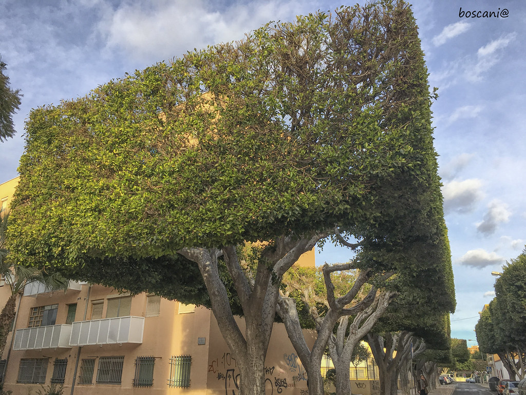 The World S Best Photos Of Arbol And Ficus Flickr Hive Mind