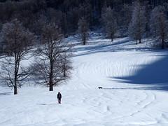 téli túra / winter hike (debreczeniemoke) Tags: tél winter hó snow túra hiking erdő forest fa tree hegy mountain gutin gutinhegység gutinmountains kakastaréj creastacocoşului olympusem5