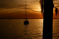 Sunset On The St Johns River (Harold Brown) Tags: florida flowersplants fuji fujifilmxt100 outdoor plant plants river sailboat sky spanishmoss stjohnscounty sunset tillandsiausneoides transportation usa water watercraft winter xt100 bhagavideocom clouds fl haroldbrowncom harolddashbrowncom masterplannedcommunity photosbhagavideocom riverclub rivertown stjohns stjohnsriver haroldbrown