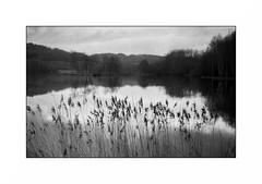 Le Morvan (Punkrocker*) Tags: nikon s2 rf rangefinder nikkor 50mm 5014 sc film kodak trix pushed 800 nb bwfp monochrome lake lac landscape paysage morvan bourgogne france