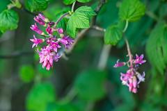 Sweeney Ridge. Pacifica, CA. (j1985w) Tags: california pacifica sweeneyridge plants flower